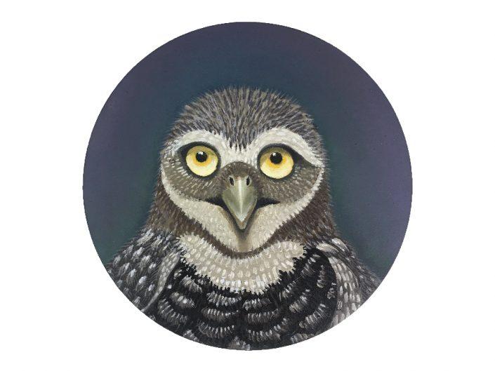 burrowing owl portrait-oil painting