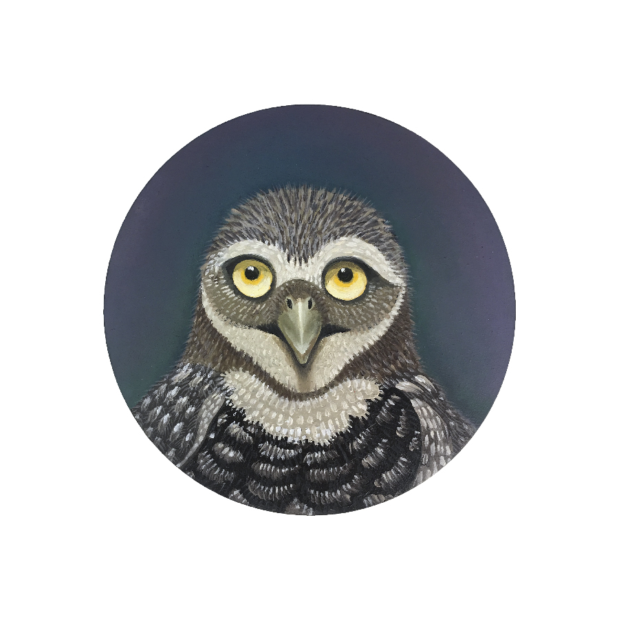 owl-oil painting