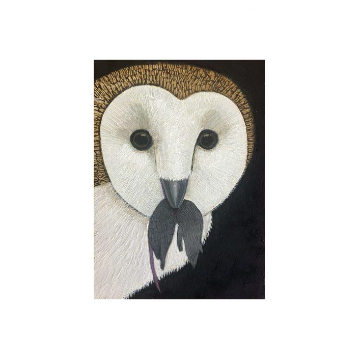 barn owl, owl, bird, rodent